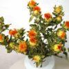 Carthamus-seche-en-vente-kiosk-a-fleurs
