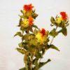 fleur séchée de carthamus en vente livraison france