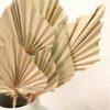 palmes-sechees-fleur-vente-en-ligne-kiosk-toulouse